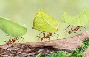 Thông tin khám phá mới về loài Kiến