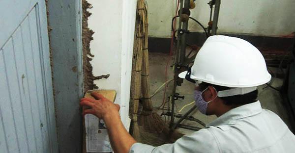 Công ty diệt mối quận Thủ Đức - TP HCM
