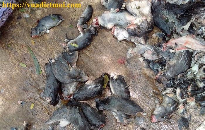 Dịch vụ diệt chuột tốt nhất Thái Nguyên