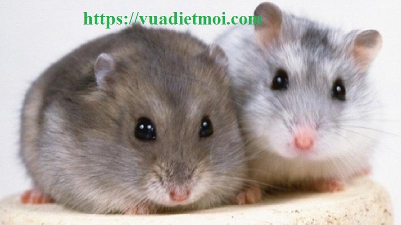 Công ty diệt chuột tốt nhất Sóc Trăng