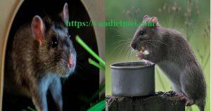 Công ty diệt chuột tốt nhất Bình Định