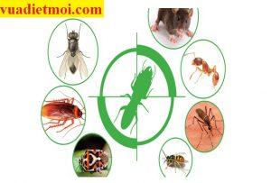 Dịch vụ xử lý côn trùng gây hại tại Quảng Nam