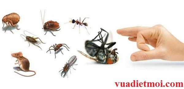 Công ty kiểm soát các loài gây hại hàng đầu tại Lâm Đồng