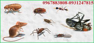 Công ty Đại Việt chuyên cung cấp các dịch vụ xử lý côn trùng, mối, chuột, muỗi, kiến,......chuyên nghiệp tại Đắk Lắk