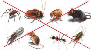 Dịch vụ kiểm soát côn trùng gây hại Đại Việt chuyên nghiệp hàng đầu tại Tây Ninh