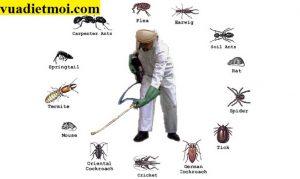 Công ty phun diệt côn trùng tại Quảng Nam chuyên nghiệp, chất lượng